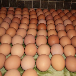 Buy cheap Fresh Brown Table Eggs