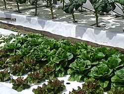 Urban Farming Bay Area