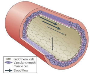 synthetic muscle fiber