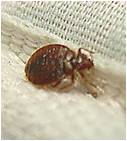 Bed Bug Maintenance Service