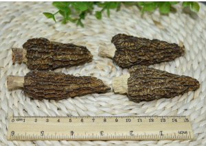 Buy Dried Wild Morchella Mushrooms from agrinoon