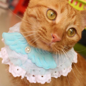 """Angel Wing"" Lace Cat Collar"