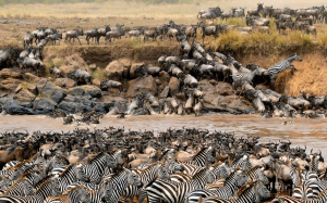 5-Day Wildebeest Migration Jamboree Kenya Safari