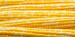 Quality Yellow maize