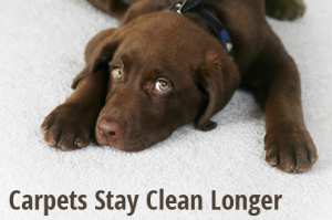 Carpet & Upholstery Cleaning Southlake TX