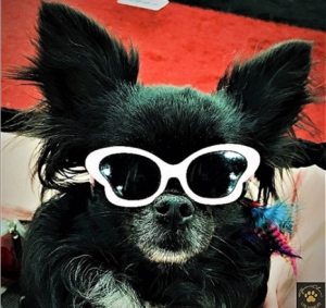Tiny Dog Butterfly Sunglasses in Many Colors