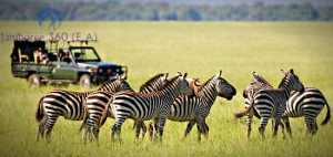 7-Day Safari 6 Night Tanzania & Zanzibar Combined Jamboree Holiday