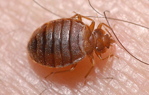 Bed Bug Removal Services Royersford PA