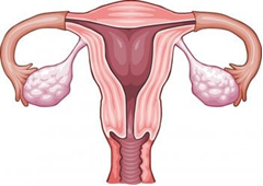 Laser surgery for fibroids in India at the best possible prices