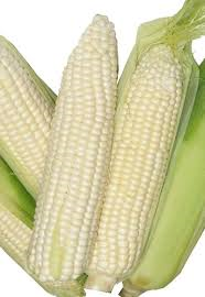 WHITE MAIZE FOR SALE