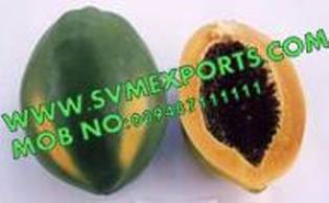 Carica Papaya Leaves Suppliers India