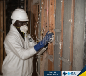 FDP Mold Certified Mold Remediation