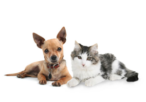 Puppy & Kitty vaccinations