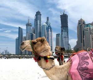 Camel Rides in Dubai with budget tours