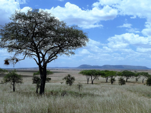 Serengeti National Park Tour Package