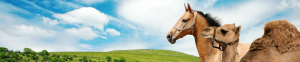 Horse and Camel Products