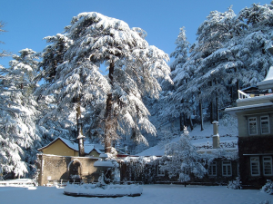 Shimla Honeymoon packages 2 Nights /3 Days Rs.6950/-