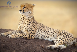 7-Day Private Bush Safari Kenya Jamboree Package