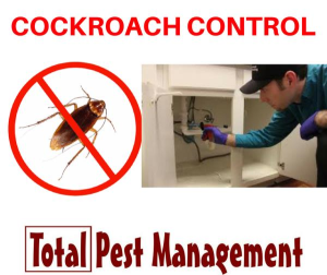 Fly Pest Control Services in pune, Mumbai
