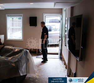 FDP Mold Remediation Process