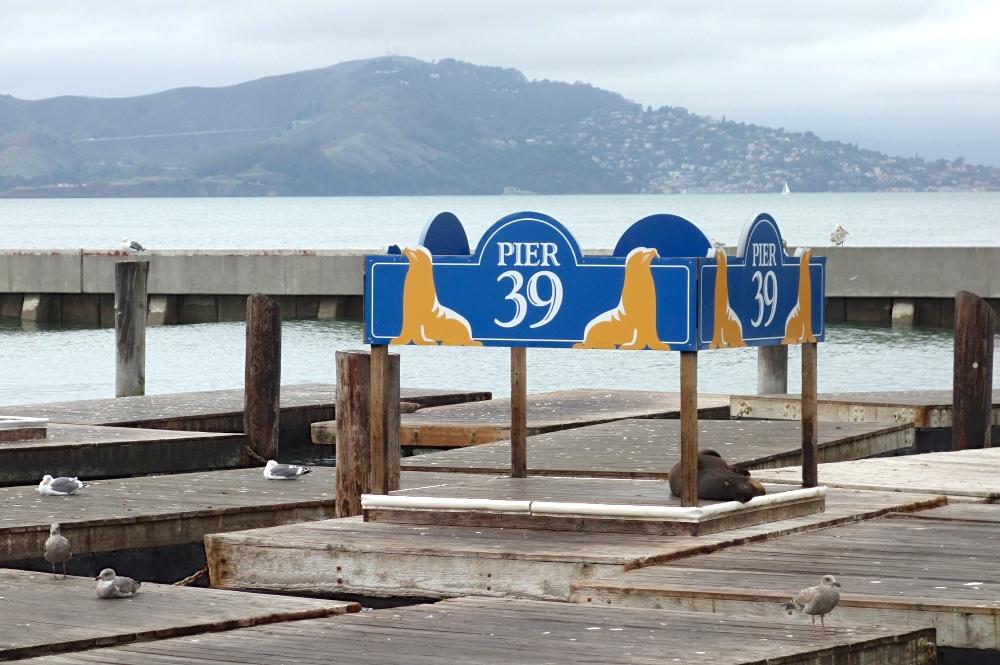 Empty Sea Lion Dock