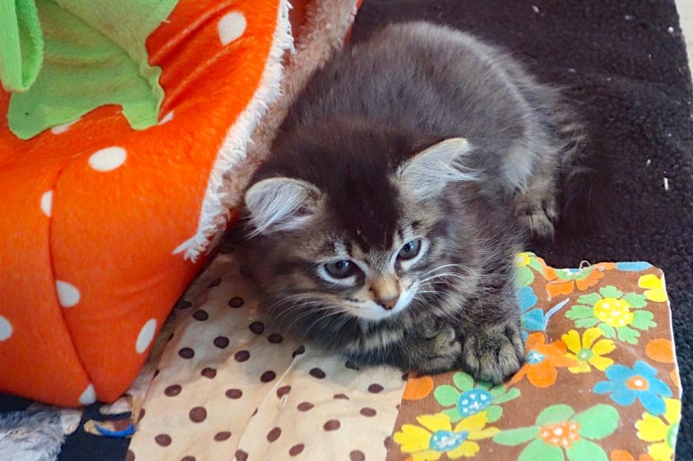 Cat at SFSPCA