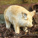 Baby Porker Pig 8