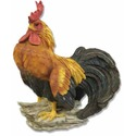 Rooster-Standing 14