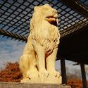 """Lion Guard 16""""H"""