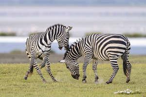 Orms destination tanzania elliottneep10