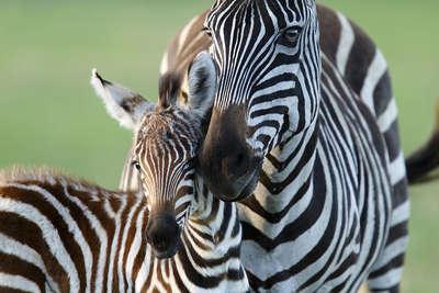 Orms tanzania tour ngorongorocraterextension mariuscoetzee06