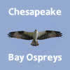 Cbosprey