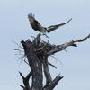 Fort_pickens_new_nest_b_worth__4-21-12_(146)s