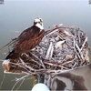 Jack_visiting_his_nest_this_morning_03132019