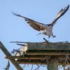 Op_osprey_home-8879