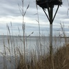 North_bay_nest_1-2