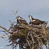 _mg_2388-the-pair-in-the-nest-together