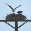 Nest1_day5
