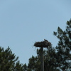 Osprey_038