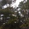 Osprey_cove_1-2
