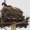 Nest_exchange_6982