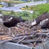 Screenshot_2020-05-29_osprey_webcam_cape_henlopen_state_park__lewes__delaware(2)