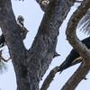 Birdid-1.jpg-1