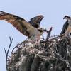 Birdid-1.jpg-2