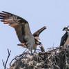 Birdid-1.jpg-3