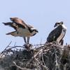 Birdid-1.jpg-4