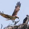 Birdid-1.jpg-5