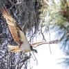 Birdid-1.jpg-6