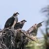 Birdid-1.jpg-7