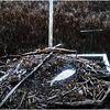 Osprey_109_nest